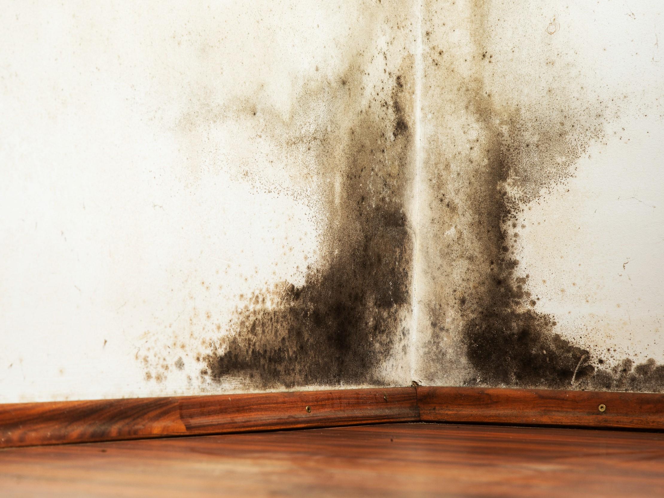 Pas på skjult skimmelsvamp